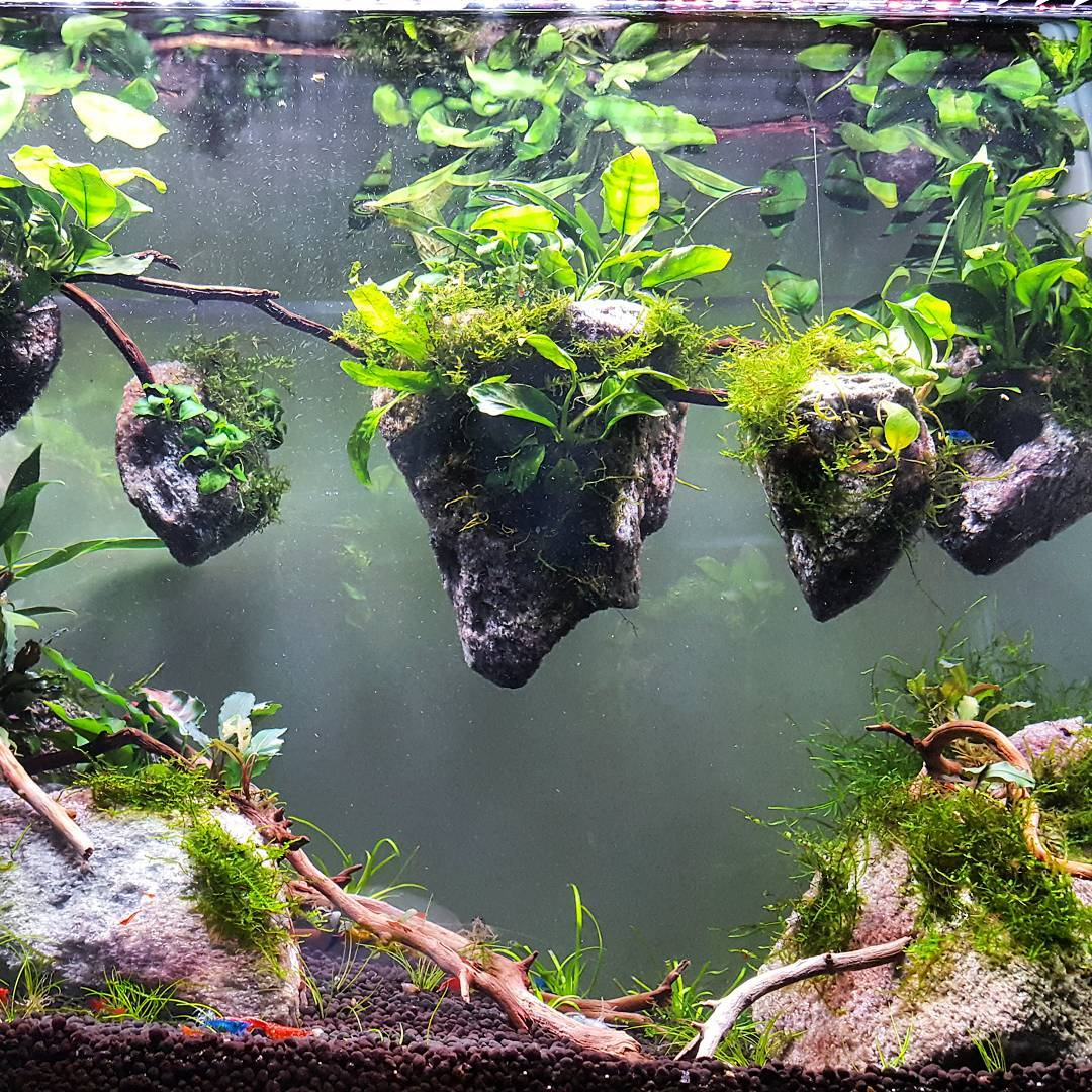 Avatar Aquarium by AQUAPROS